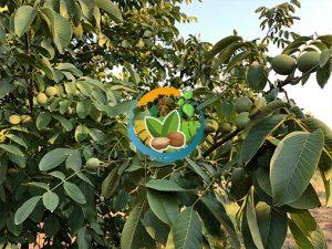 fernor ceviz bahçesi